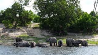 水辺の象の群れ