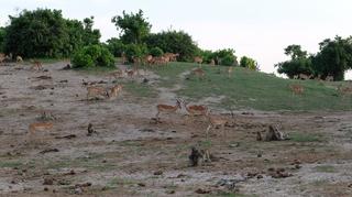 水辺に集まる動物